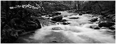 White water of stream in decidous forest. Great Smoky Mountains National Park (Panoramic black and white)