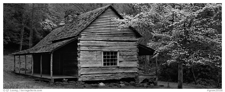 Wooden Appalachian mountain cabin and dogwood tree in bloom. Great Smoky Mountains National Park (black and white)