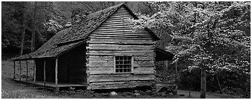Wooden Appalachian mountain cabin and dogwood tree in bloom. Great Smoky Mountains National Park (Panoramic black and white)