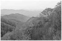 Ridge and mountains covered with trees in autuman foliage, dawn, North Carolina. Great Smoky Mountains National Park ( black and white)