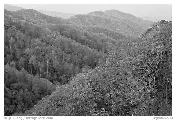Ridges covered with deciduous trees in fall, North Carolina. Great Smoky Mountains National Park (black and white)