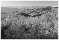 Mountains in autumn foliage, early morning, North Carolina. Great Smoky Mountains National Park ( black and white)