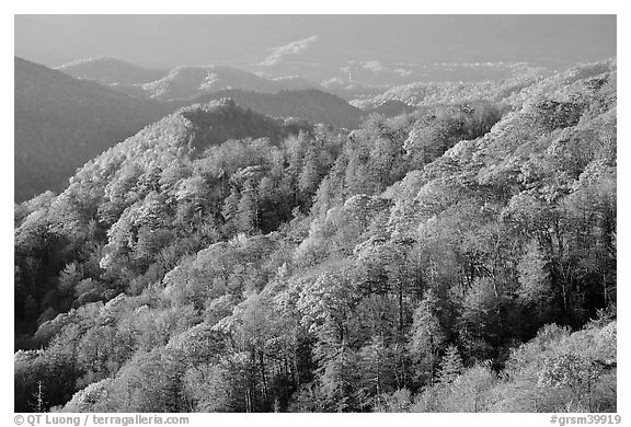Hills covered with trees in autumn foliage, early morning, North Carolina. Great Smoky Mountains National Park (black and white)