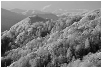 Hills covered with trees in autumn foliage, early morning, North Carolina. Great Smoky Mountains National Park ( black and white)