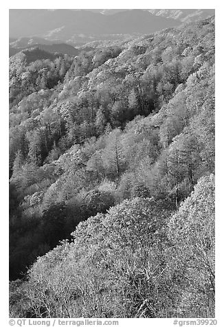Slopes with forest in fall foliage, North Carolina. Great Smoky Mountains National Park (black and white)
