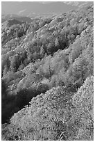 Slopes with forest in fall foliage, North Carolina. Great Smoky Mountains National Park, USA. (black and white)
