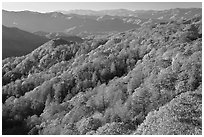 Ridges with trees in autumn foliage, North Carolina. Great Smoky Mountains National Park, USA. (black and white)