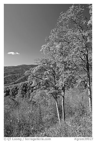 Trees in autumn colors and mountain vista, North Carolina. Great Smoky Mountains National Park (black and white)
