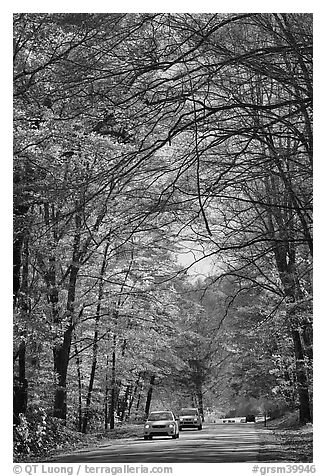Cars on main park road with fall foliage, North Carolina. Great Smoky Mountains National Park (black and white)