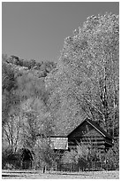 Historic log building in fall, Oconaluftee Mountain Farm, North Carolina. Great Smoky Mountains National Park, USA. (black and white)