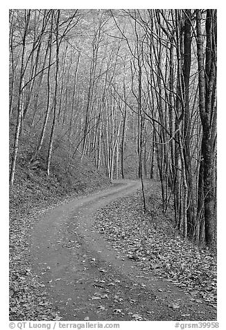 Unpaved Balsam Mountain Road in autumn forest, North Carolina. Great Smoky Mountains National Park (black and white)