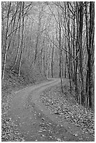 Unpaved Balsam Mountain Road in autumn forest, North Carolina. Great Smoky Mountains National Park, USA. (black and white)