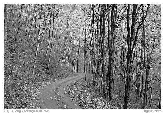 Unpaved road in fall forest, Balsam Mountain, North Carolina. Great Smoky Mountains National Park (black and white)