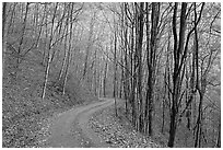 Unpaved road in fall forest, Balsam Mountain, North Carolina. Great Smoky Mountains National Park, USA. (black and white)