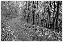 Balsam Mountain Road in autumn forest, North Carolina. Great Smoky Mountains National Park, USA. (black and white)