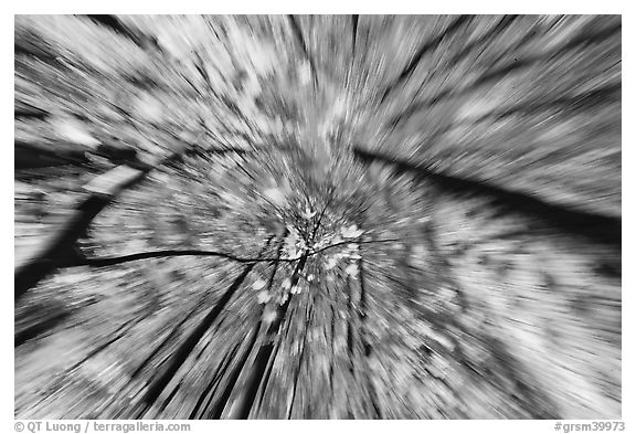 Motion zoom effect, forest in fall foliage, Tennessee. Great Smoky Mountains National Park (black and white)