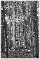 Family at picnic table in autumn forest, Tennessee. Great Smoky Mountains National Park ( black and white)