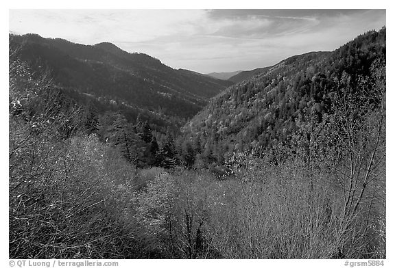 Valley covered with trees in late autumn, Morton overlook, Tennessee. Great Smoky Mountains National Park (black and white)