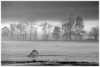 Meadow, trees, and fog, early morning, Cades Cove, Tennessee. Great Smoky Mountains National Park, USA. (black and white)