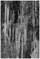 Icicles on rock face, Tennessee. Great Smoky Mountains National Park ( black and white)