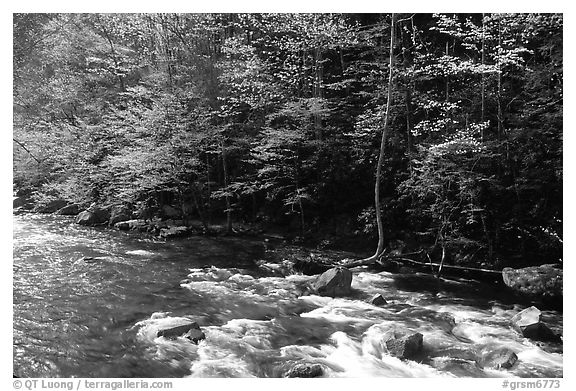 Sunlit Little River in the spring, early morning, Tennessee. Great Smoky Mountains National Park (black and white)