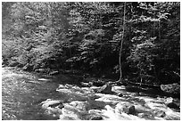 Sunlit Little River in the spring, early morning, Tennessee. Great Smoky Mountains National Park ( black and white)