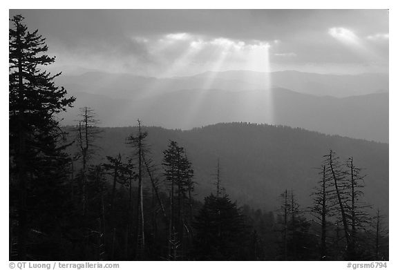 Silhouetted trees and God's rays from Clingmans Dome, early morning, North Carolina. Great Smoky Mountains National Park (black and white)