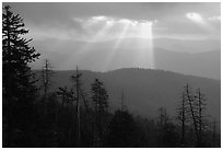 Silhouetted trees and God's rays from Clingmans Dome, early morning, North Carolina. Great Smoky Mountains National Park, USA. (black and white)