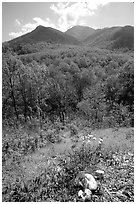 Mushroom, Hillside, and Mount Le Conte, Tennessee. Great Smoky Mountains National Park, USA. (black and white)