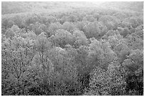 Forest canopy in spring, Tennessee. Great Smoky Mountains National Park, USA. (black and white)