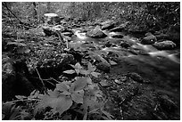 Cosby Creek, Tennessee. Great Smoky Mountains National Park, USA. (black and white)
