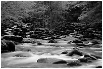 Middle Prong of the Little Pigeon River, Tennessee. Great Smoky Mountains National Park, USA. (black and white)