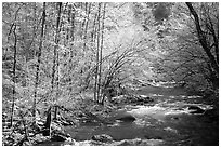 Middle Prong of the Little River in the sun, Tennessee. Great Smoky Mountains National Park, USA. (black and white)