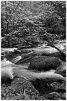 Blooming dogwood and stream flowing over boulders, Middle Prong of the Little River, Tennessee. Great Smoky Mountains National Park, USA. (black and white)