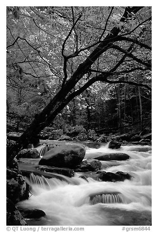 Dogwoods trees in bloom overhanging river cascades, Middle Prong of the Little River, Tennessee. Great Smoky Mountains National Park (black and white)