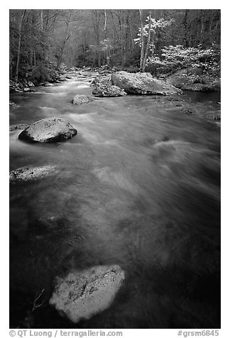 Flowing water, Middle Prong of the Little River, Tennessee. Great Smoky Mountains National Park (black and white)