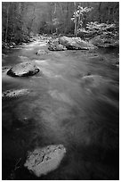 Flowing water, Middle Prong of the Little River, Tennessee. Great Smoky Mountains National Park, USA. (black and white)