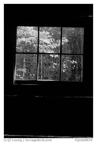 Dogwood blooms seen from the window of Jim Bales cabin, Tennessee. Great Smoky Mountains National Park (black and white)