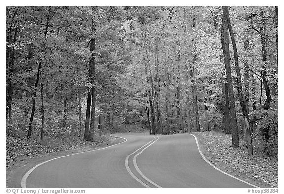 Windy road and fall colors on West Mountain. Hot Springs National Park (black and white)