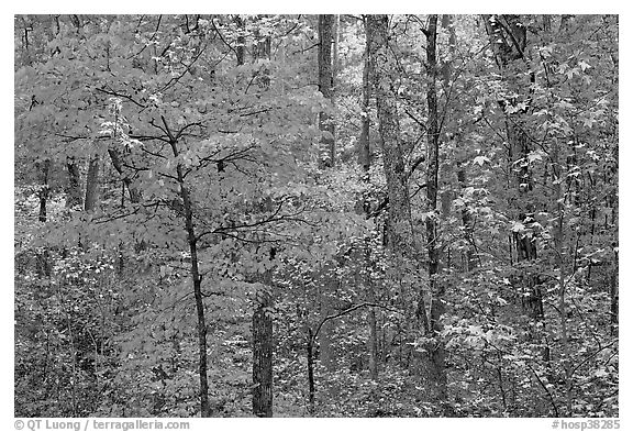 Trees in fall colors, West Mountain. Hot Springs National Park (black and white)
