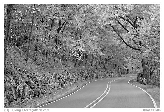 Rood, stone wall, fall colors, West Mountain. Hot Springs National Park (black and white)