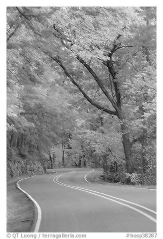 Rood, curve, fall colors, West Mountain. Hot Springs National Park (black and white)