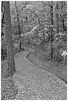 Built trail and fall colors, Hot Spring Mountain. Hot Springs National Park, Arkansas, USA. (black and white)