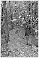 Hiker on trail amongst fall colors, Hot Spring Mountain. Hot Springs National Park, Arkansas, USA. (black and white)