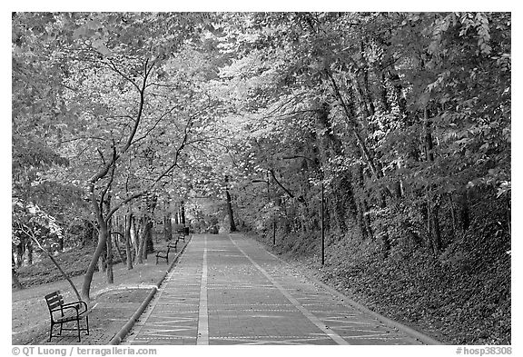 Grand Promenade in the fall. Hot Springs National Park (black and white)