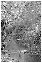 Stream and trees in fall colors, Gulpha Gorge. Hot Springs National Park, Arkansas, USA. (black and white)