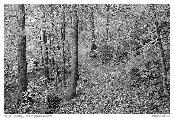 Trail and trees in fall colors, Gulpha Gorge. Hot Springs National Park (black and white)