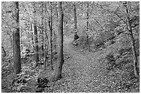 Trail and trees in fall colors, Gulpha Gorge. Hot Springs National Park, Arkansas, USA. (black and white)