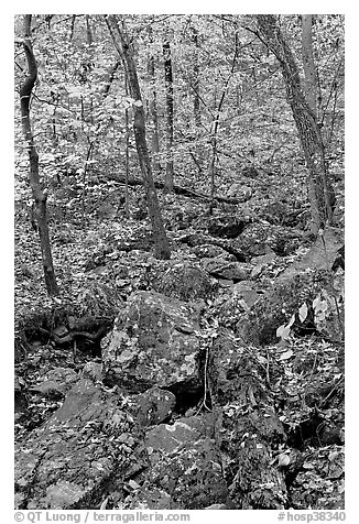 Boulders and trees in fall foliage, Gulpha Gorge. Hot Springs National Park (black and white)