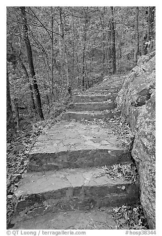 Stone steps on trail in forest with fall foliage, Gulpha Gorge. Hot Springs National Park (black and white)